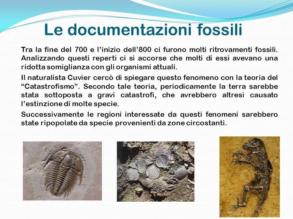 Le documentazioni fossili