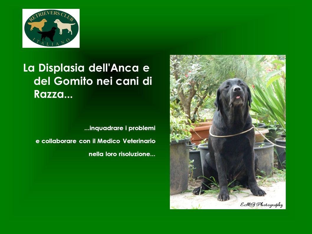 La Displasia dell Anca e del Gomito nei cani di Razza...