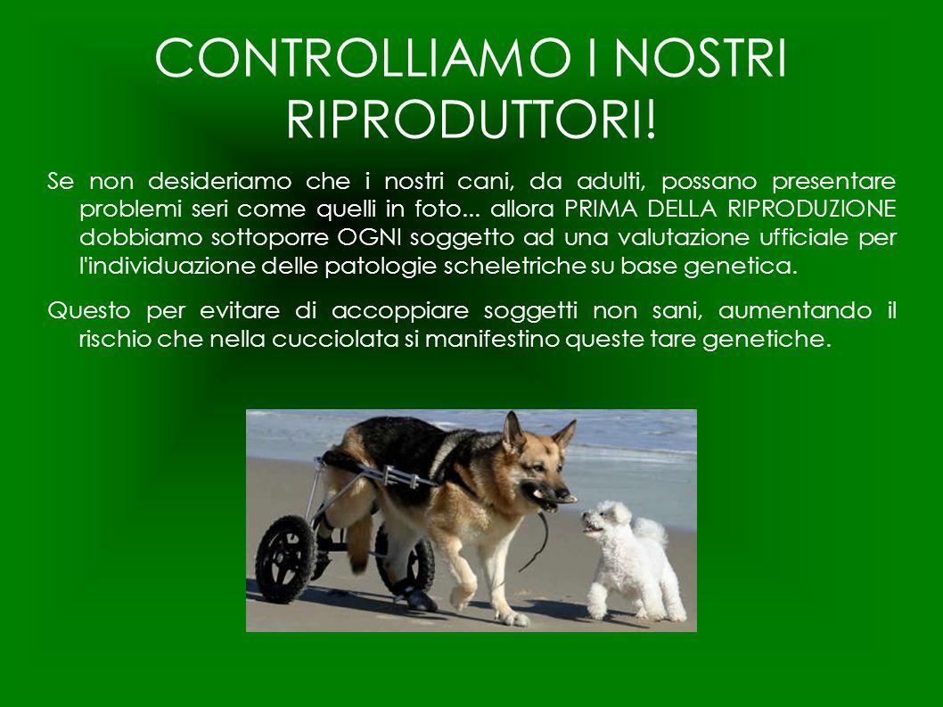 CONTROLLIAMO I NOSTRI RIPRODUTTORI!