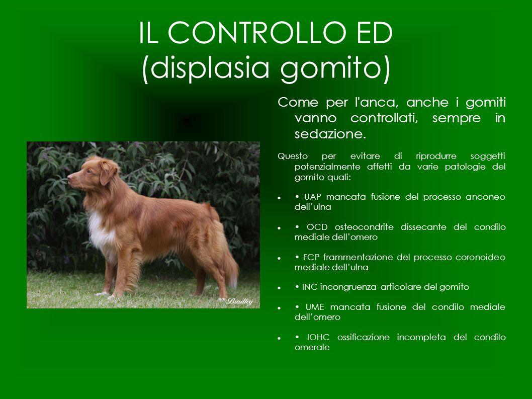 IL CONTROLLO ED (displasia gomito)