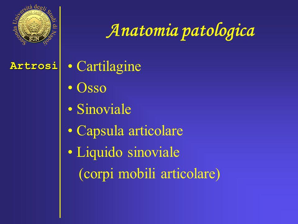 Anatomia patologica Cartilagine Osso Sinoviale Capsula articolare