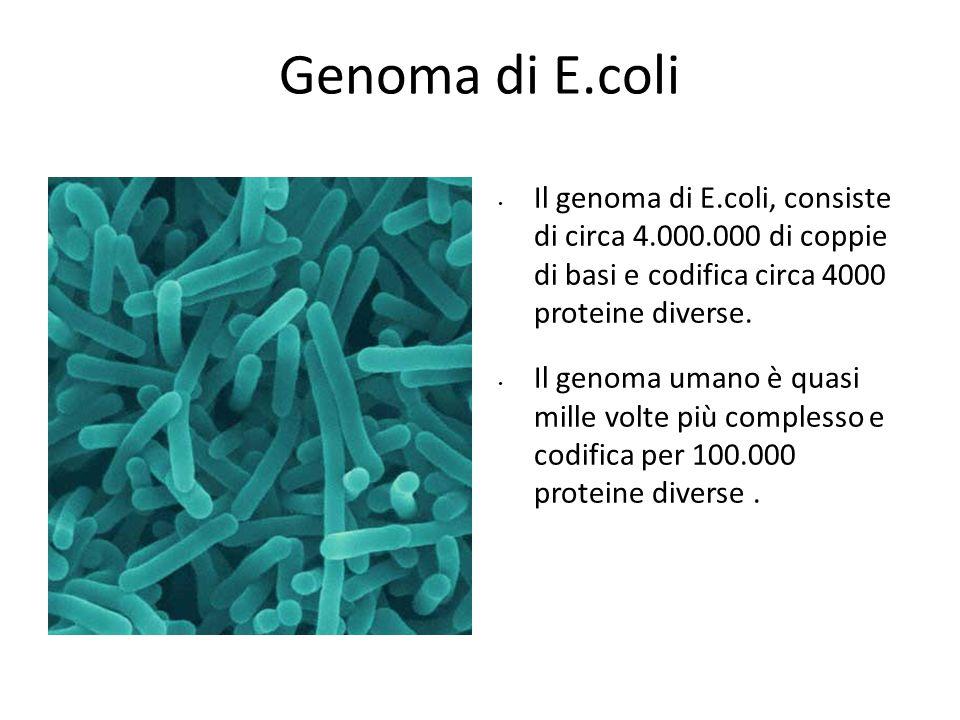 Modello sperimentale Genoma di E.coli