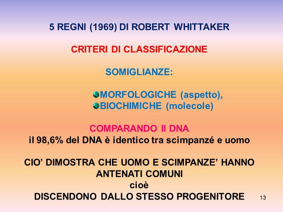 5 REGNI (1969) DI ROBERT WHITTAKER CRITERI DI CLASSIFICAZIONE