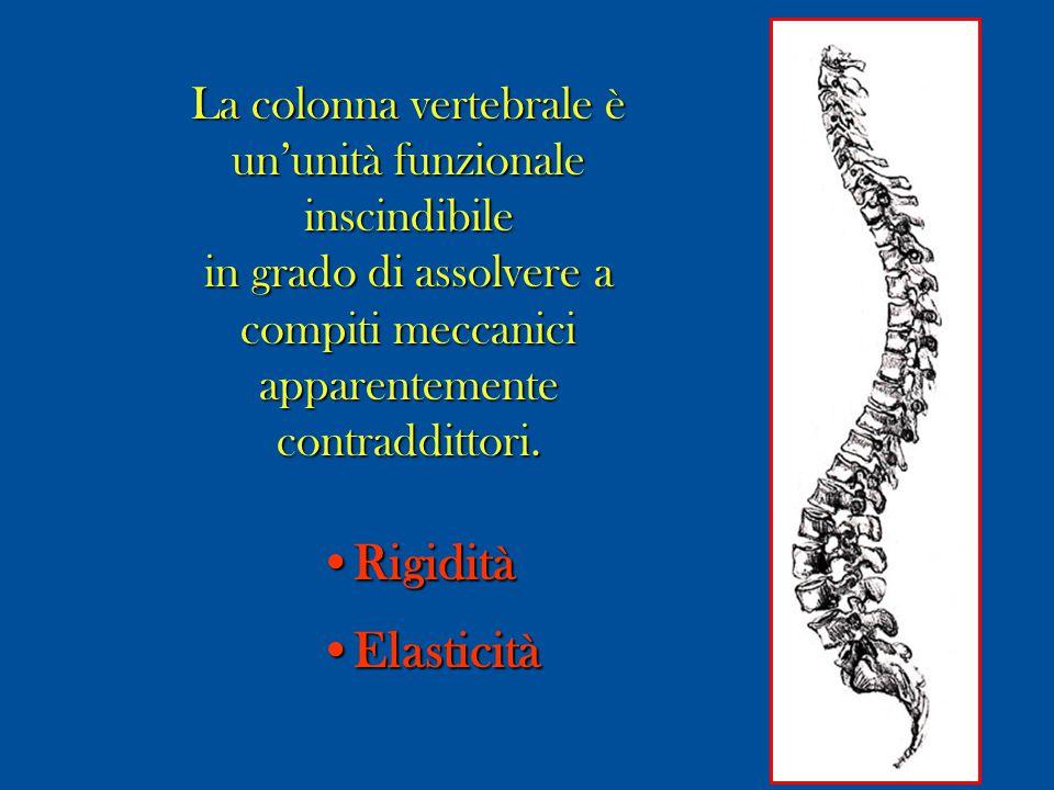 La colonna vertebrale è