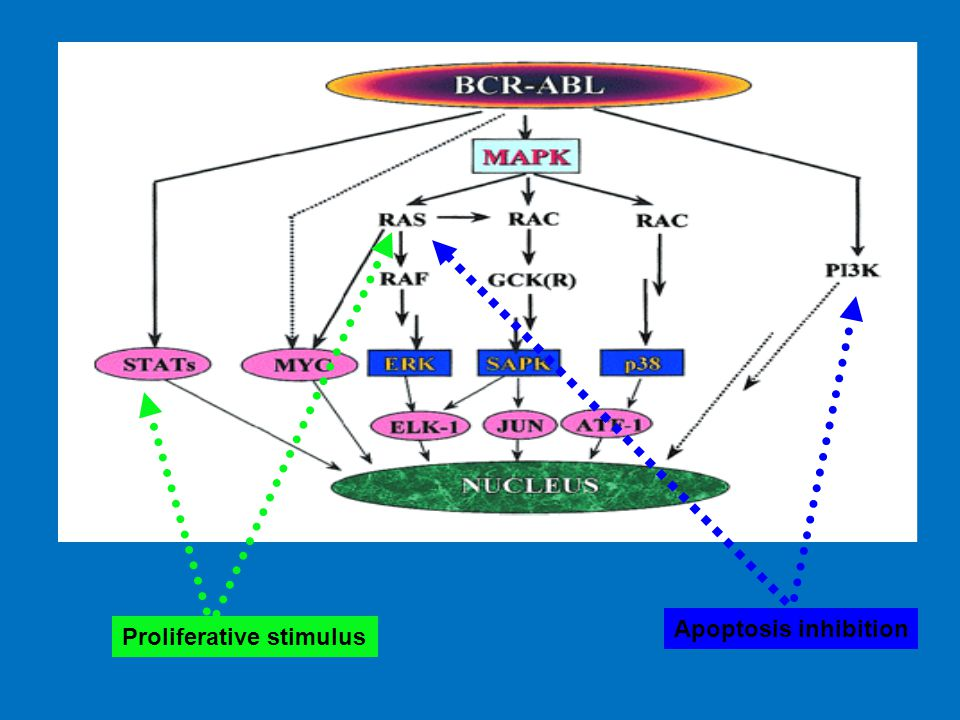 Apoptosis inhibition Proliferative stimulus