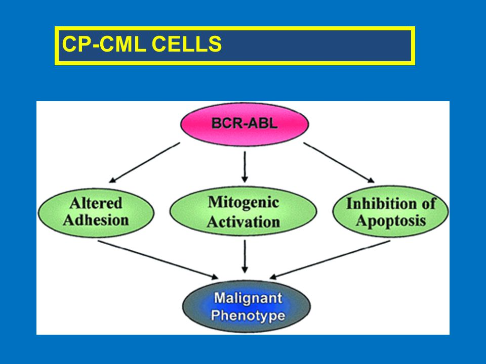 CP-CML CELLS