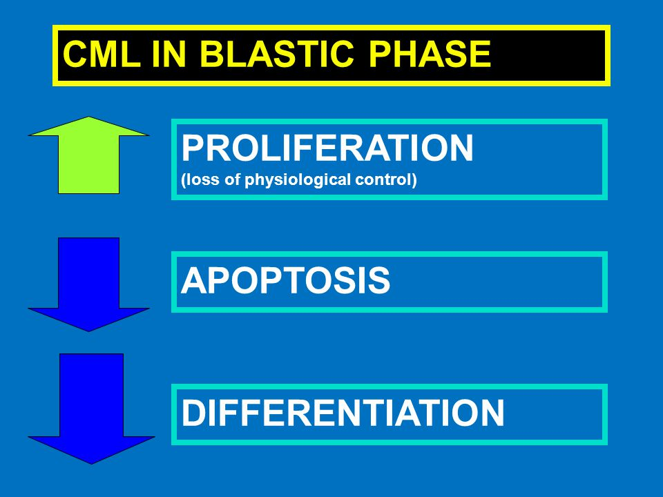 CML IN BLASTIC PHASE PROLIFERATION APOPTOSIS DIFFERENTIATION