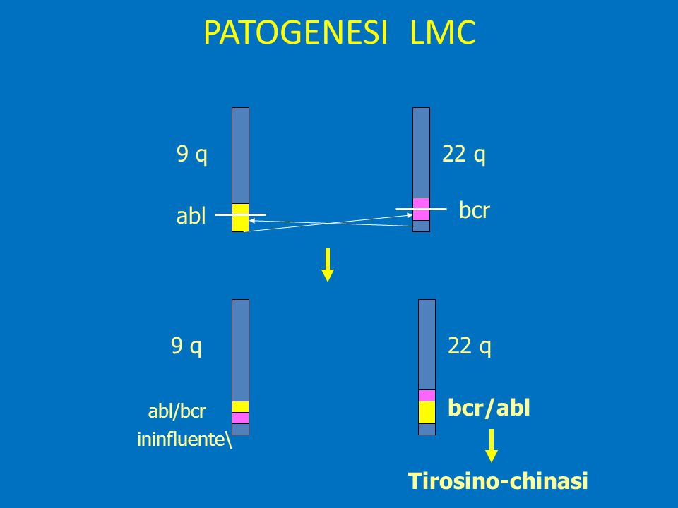 PATOGENESI LMC 9 q 22 q bcr abl 9 q 22 q bcr/abl Tirosino-chinasi
