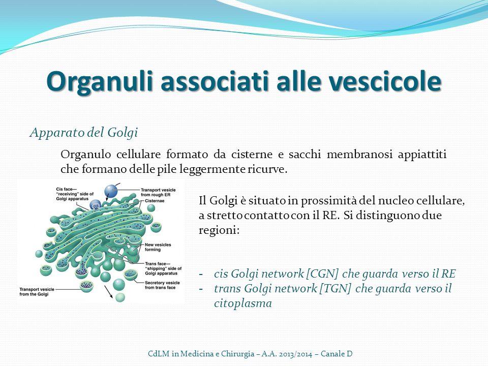 Organuli associati alle vescicole