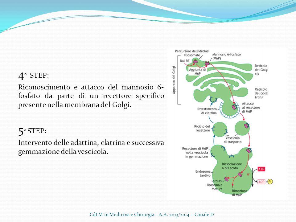 CdLM in Medicina e Chirurgia – A.A. 2013/2014 – Canale D
