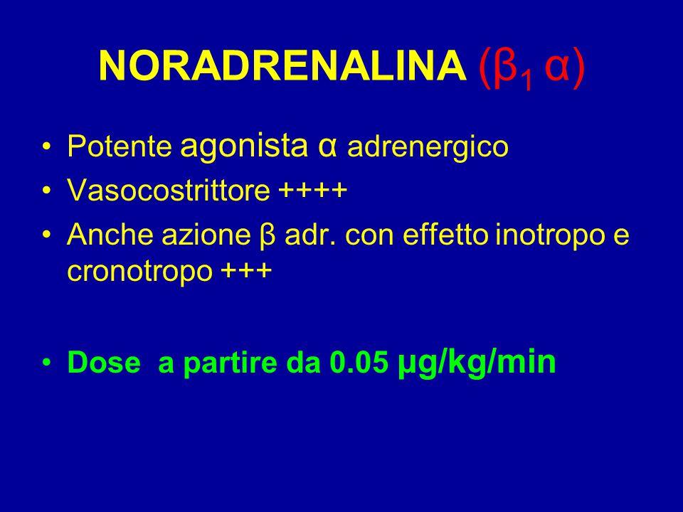 NORADRENALINA (β1 α) Potente agonista α adrenergico