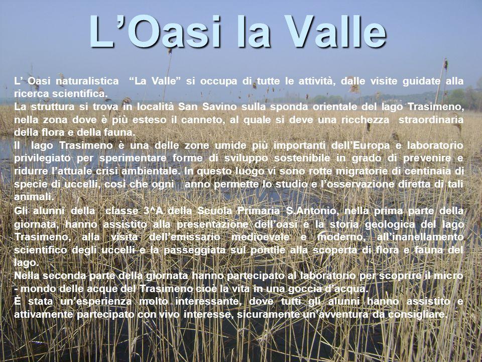L'Oasi la Valle L' Oasi naturalistica La Valle si occupa di tutte le attività, dalle visite guidate alla ricerca scientifica.