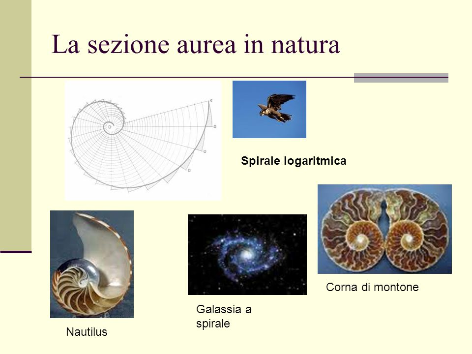 La sezione aurea in natura