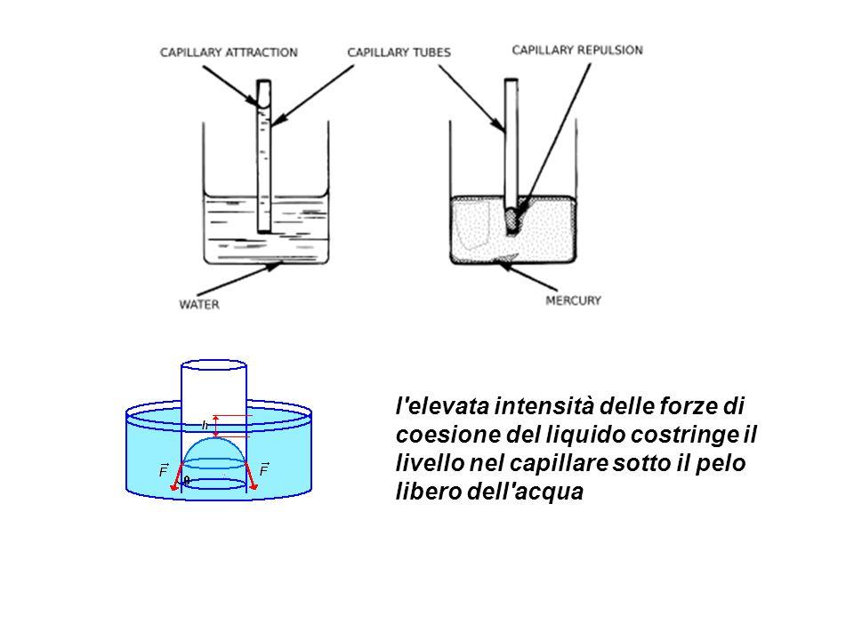 l elevata intensità delle forze di coesione del liquido costringe il livello nel capillare sotto il pelo libero dell acqua
