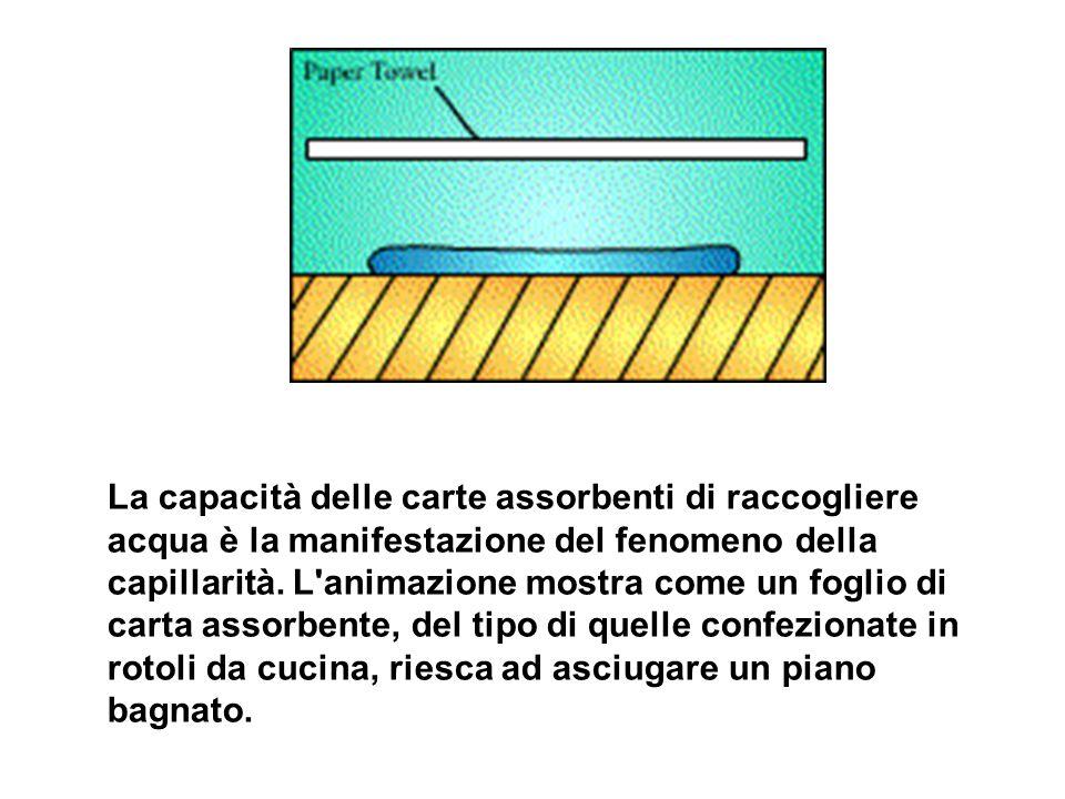 La capacità delle carte assorbenti di raccogliere acqua è la manifestazione del fenomeno della capillarità.