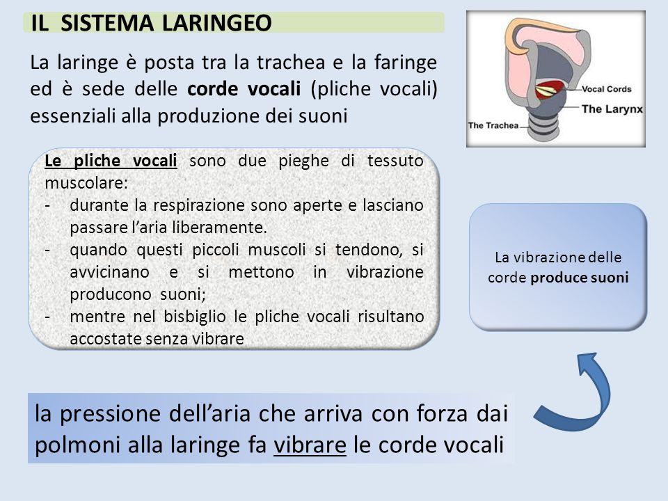 La vibrazione delle corde produce suoni