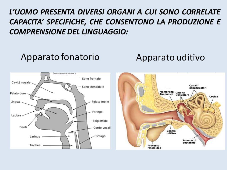 Apparato fonatorio Apparato uditivo
