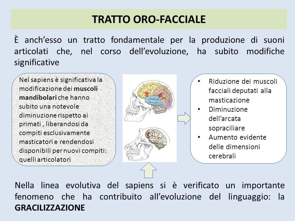 TRATTO ORO-FACCIALE