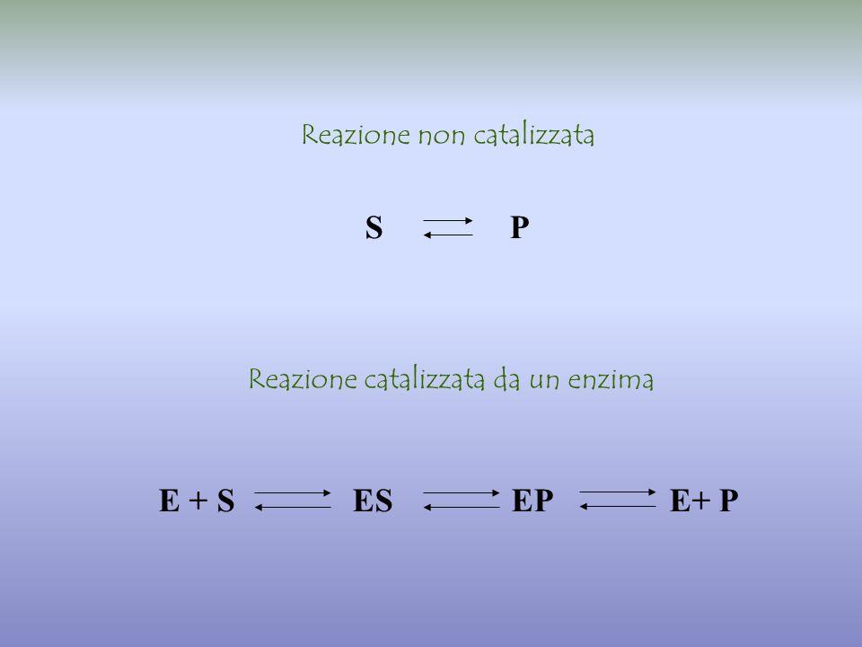 S P E + S ES EP E+ P Reazione non catalizzata