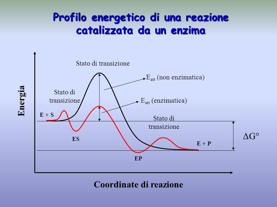 Profilo energetico di una reazione catalizzata da un enzima