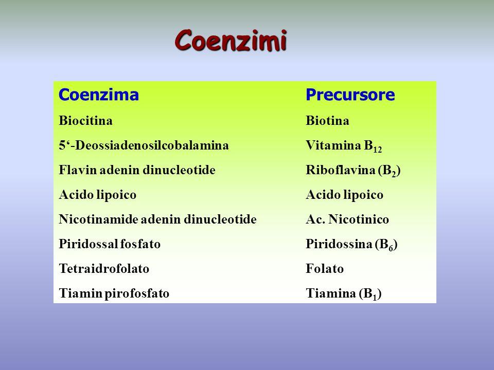Coenzimi Coenzima Precursore Biocitina Biotina
