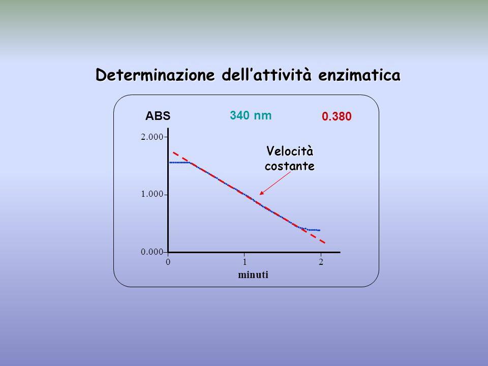 Determinazione dell'attività enzimatica