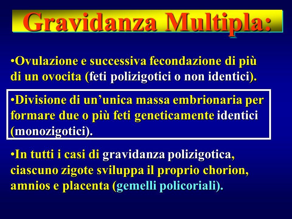 Gravidanza Multipla:Ovulazione e successiva fecondazione di più di un ovocita (feti polizigotici o non identici).