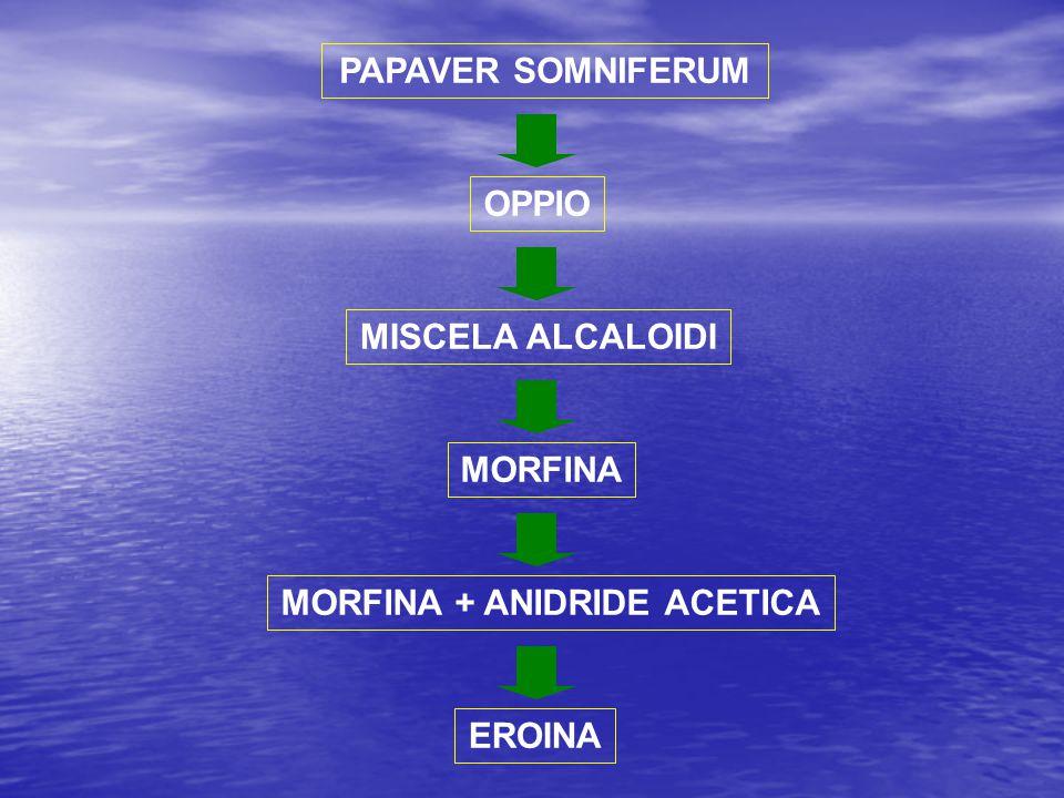 MORFINA + ANIDRIDE ACETICA