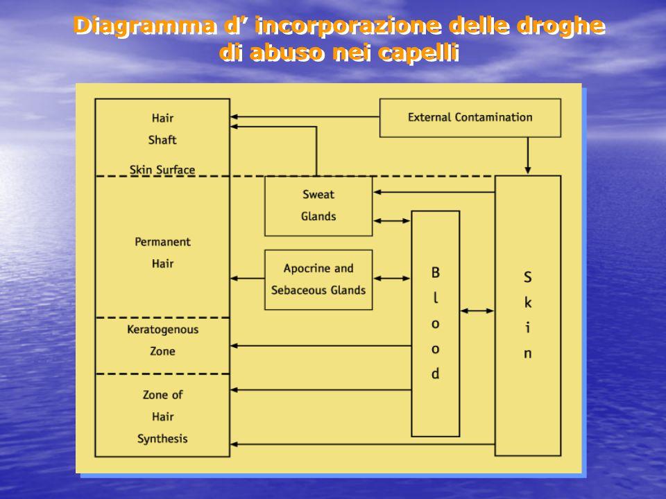 Diagramma d' incorporazione delle droghe