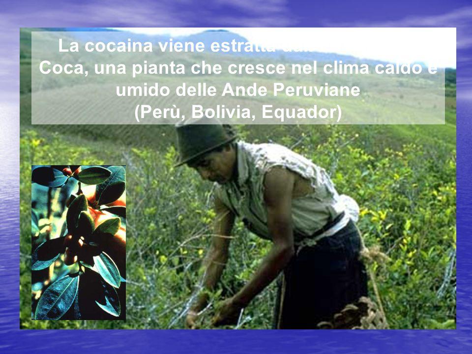 (Perù, Bolivia, Equador)