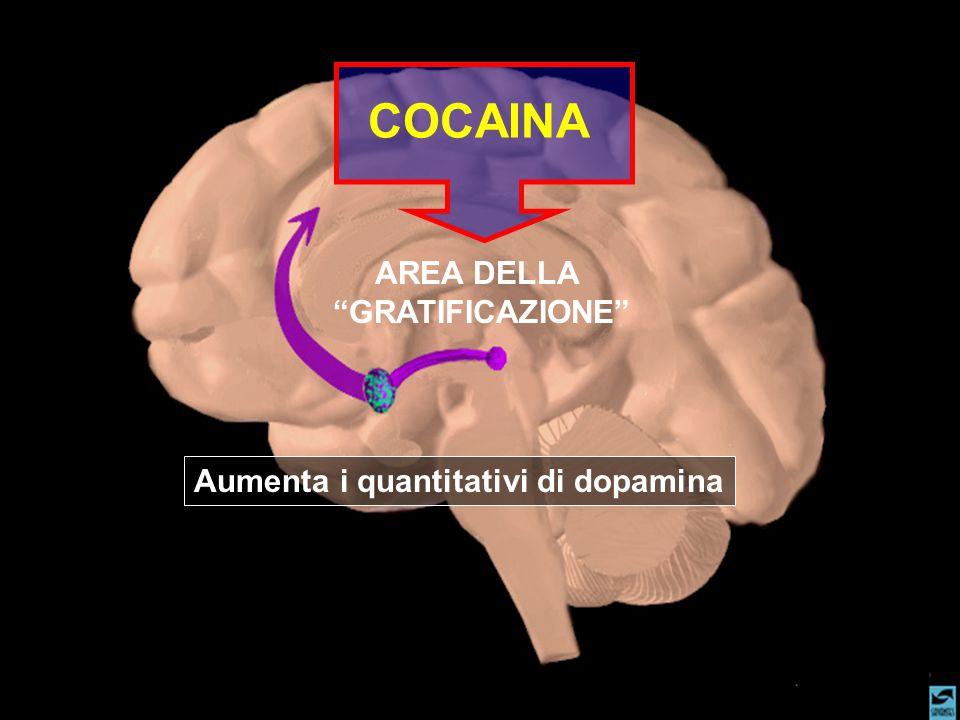 AREA DELLA GRATIFICAZIONE COCAINA Aumenta i quantitativi di dopamina