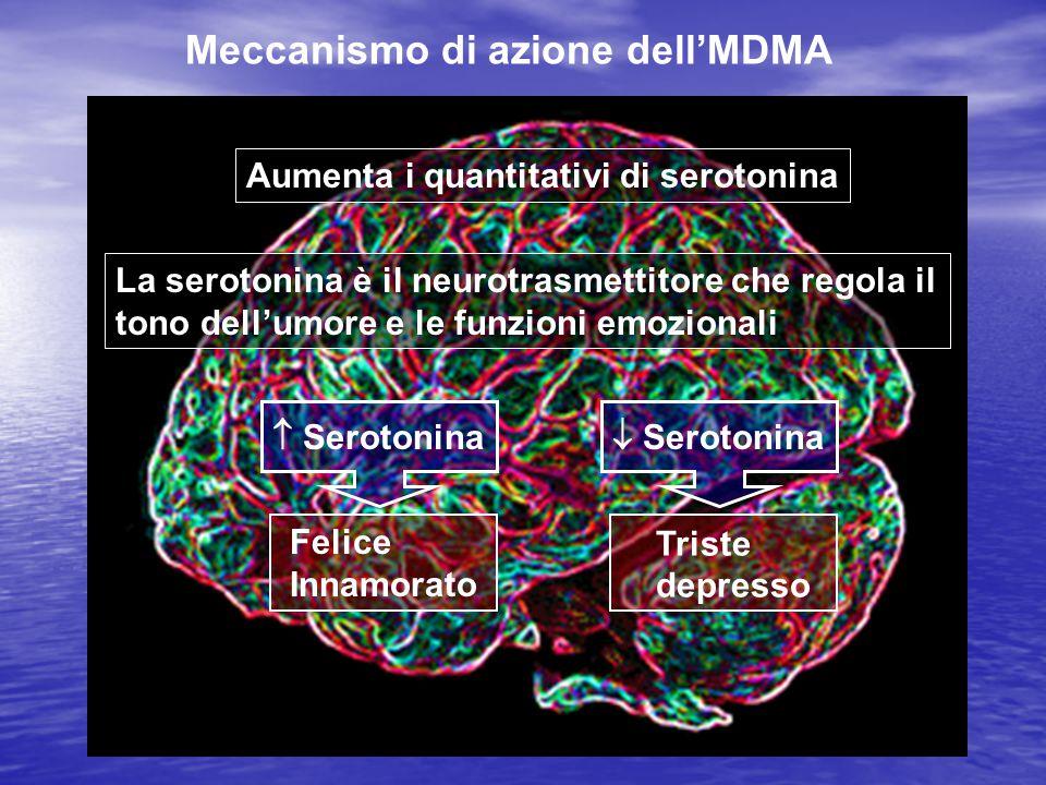 Meccanismo di azione dell'MDMA