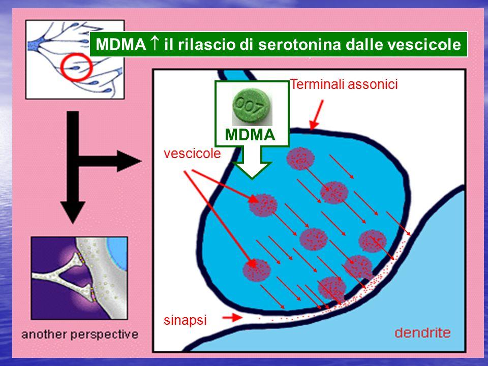 MDMA  il rilascio di serotonina dalle vescicole