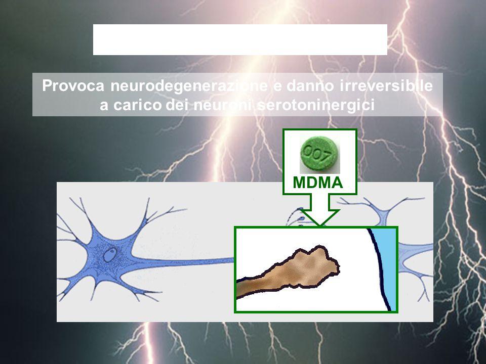 L'MDMA è NEUROTOSSICA Provoca neurodegenerazione e danno irreversibile a carico dei neuroni serotoninergici.