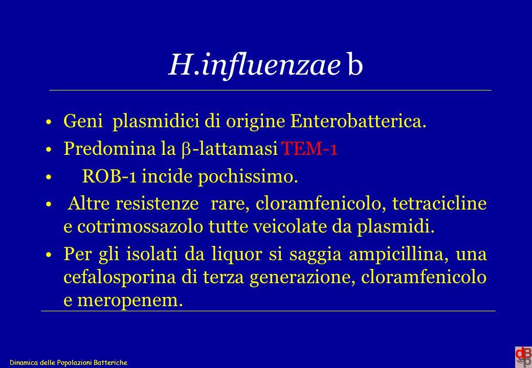 H.influenzae b Geni plasmidici di origine Enterobatterica.