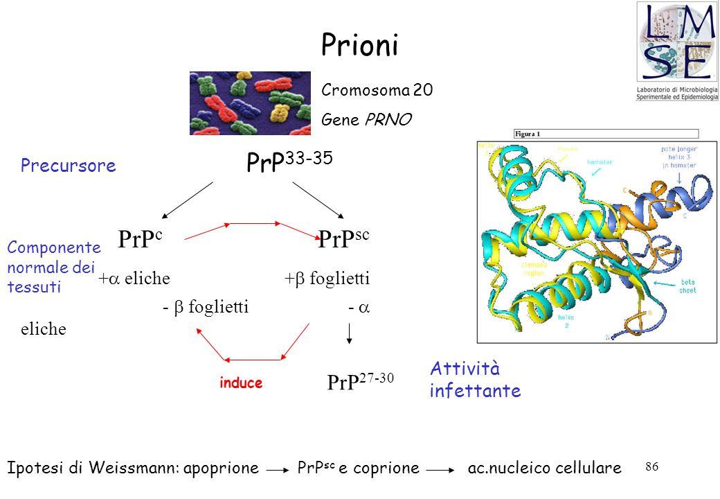 Prioni PrPc PrPsc + eliche + foglietti PrP27-30 Precursore PrP33-35