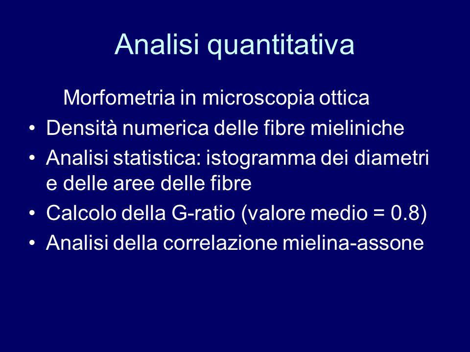 Analisi quantitativa Morfometria in microscopia ottica