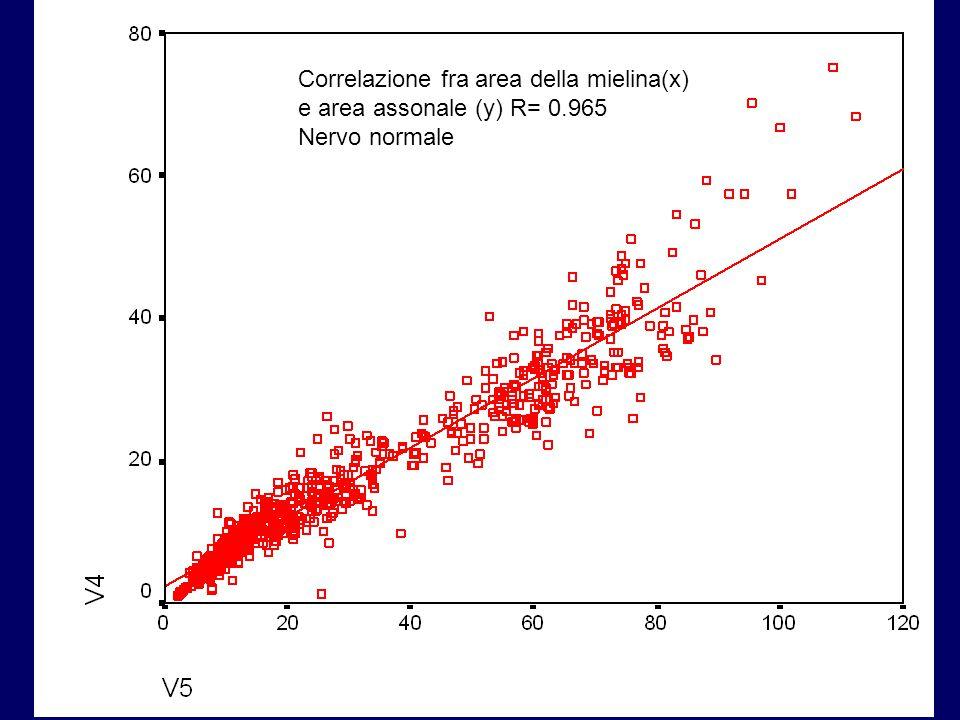 Correlazione fra area della mielina(x)