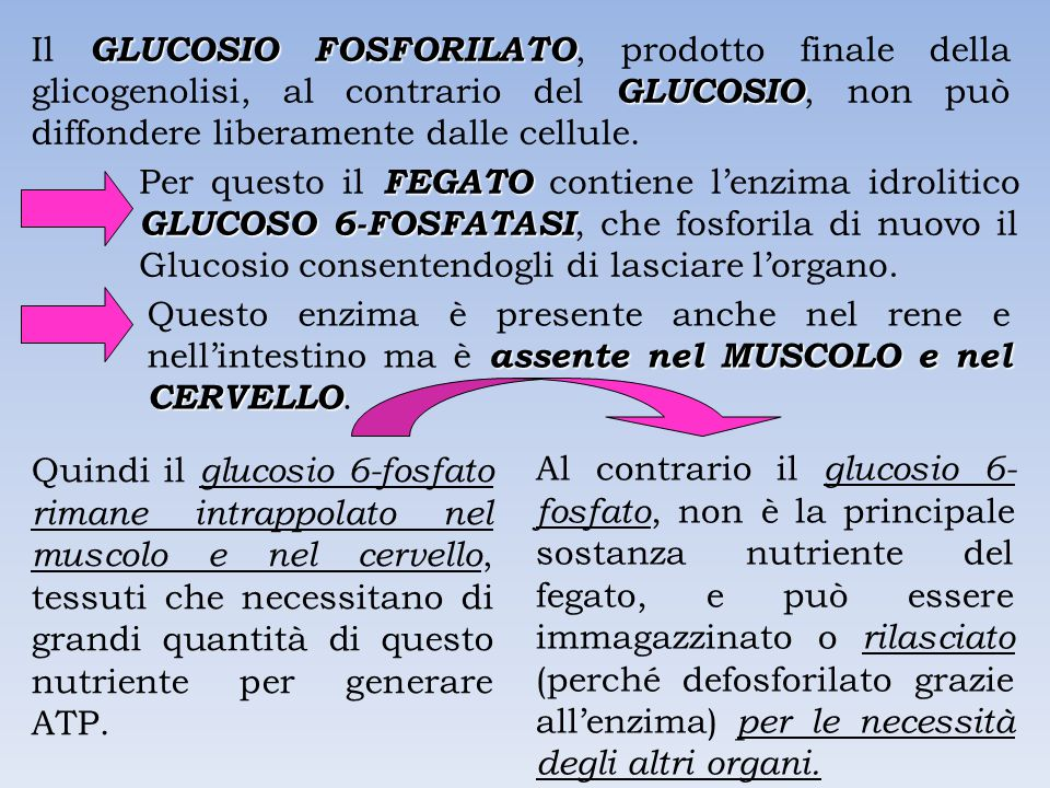 Il GLUCOSIO FOSFORILATO, prodotto finale della glicogenolisi, al contrario del GLUCOSIO, non può diffondere liberamente dalle cellule.
