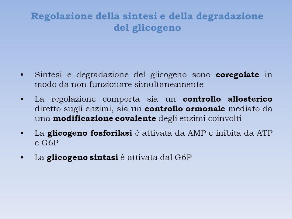 Regolazione della sintesi e della degradazione del glicogeno