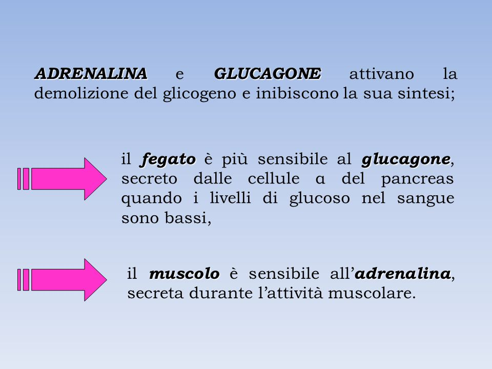 ADRENALINA e GLUCAGONE attivano la demolizione del glicogeno e inibiscono la sua sintesi;