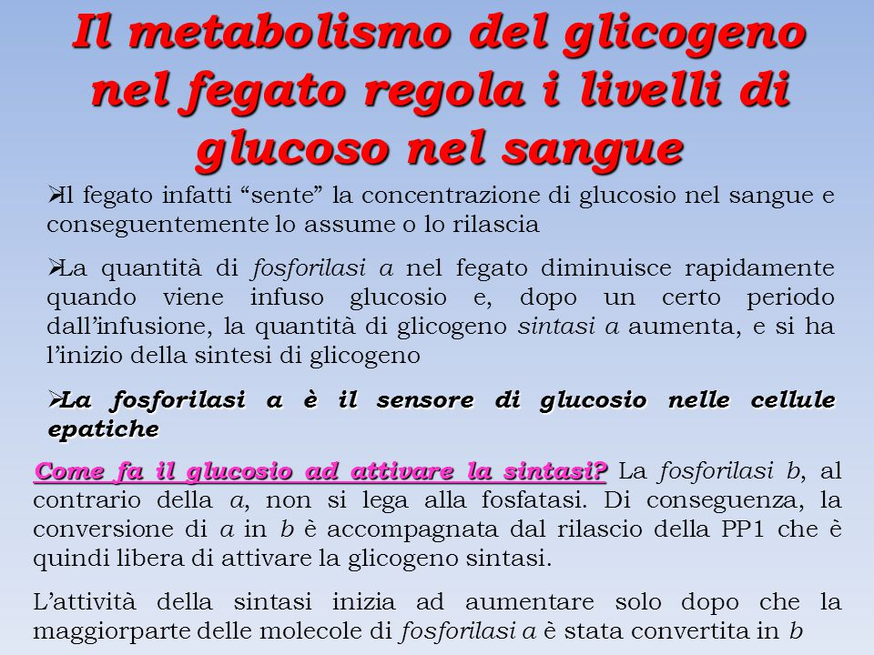 Il metabolismo del glicogeno nel fegato regola i livelli di glucoso nel sangue