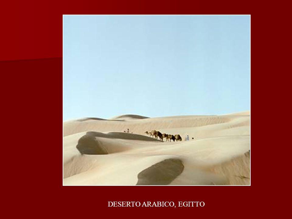 DESERTO ARABICO, EGITTO