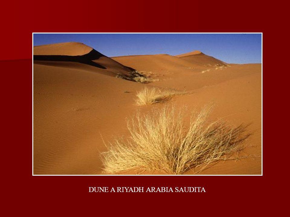 DUNE A RIYADH ARABIA SAUDITA