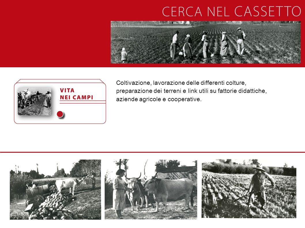Coltivazione, lavorazione delle differenti colture, preparazione dei terreni e link utili su fattorie didattiche, aziende agricole e cooperative.