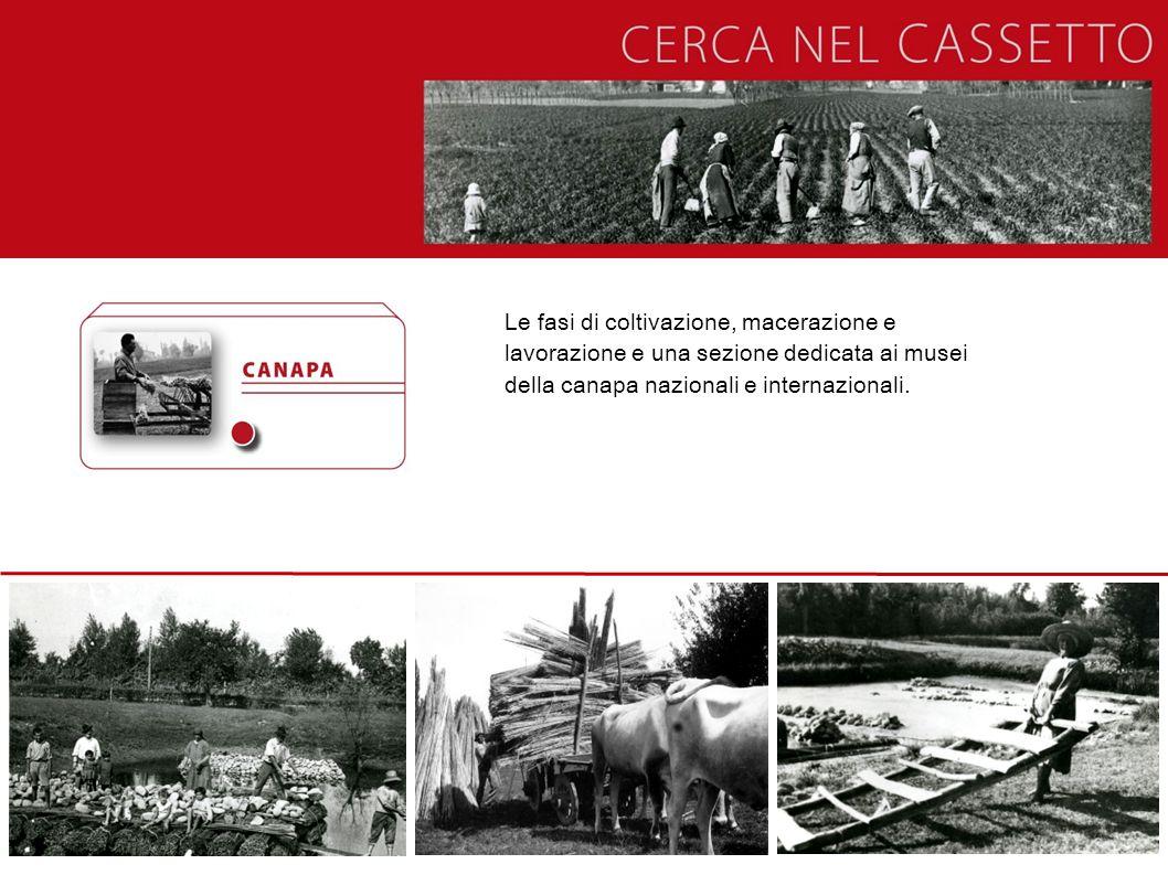 Le fasi di coltivazione, macerazione e lavorazione e una sezione dedicata ai musei della canapa nazionali e internazionali.