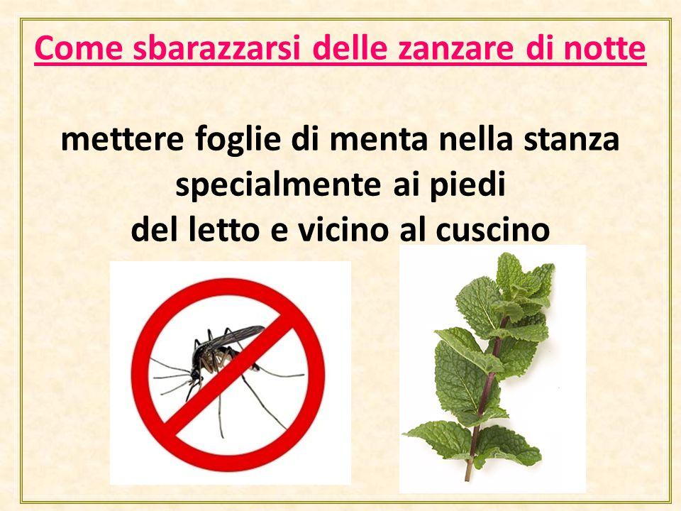 Come sbarazzarsi delle zanzare di notte mettere foglie di menta nella stanza specialmente ai piedi del letto e vicino al cuscino