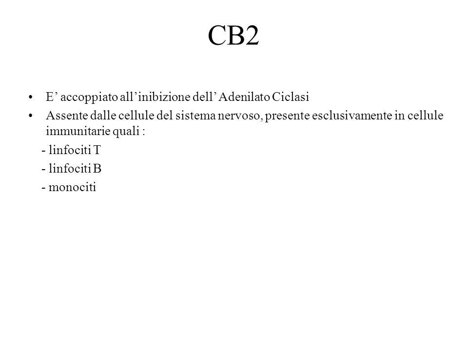 CB2 E' accoppiato all'inibizione dell' Adenilato Ciclasi