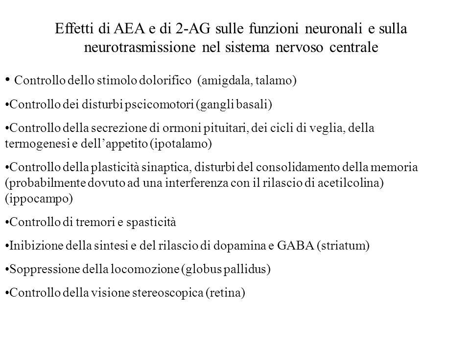 Controllo dello stimolo dolorifico (amigdala, talamo)