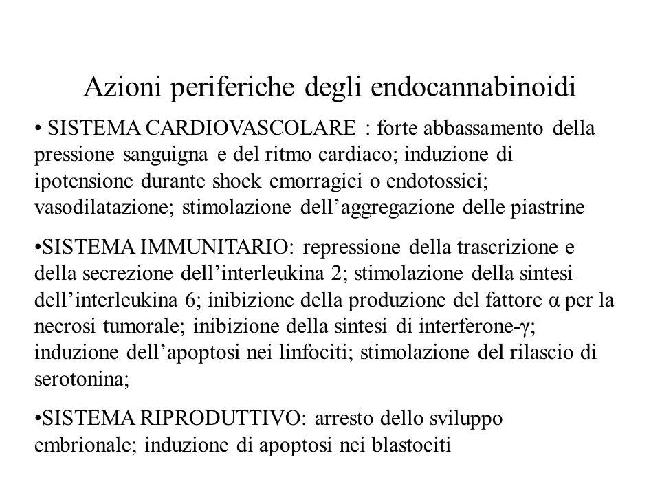Azioni periferiche degli endocannabinoidi